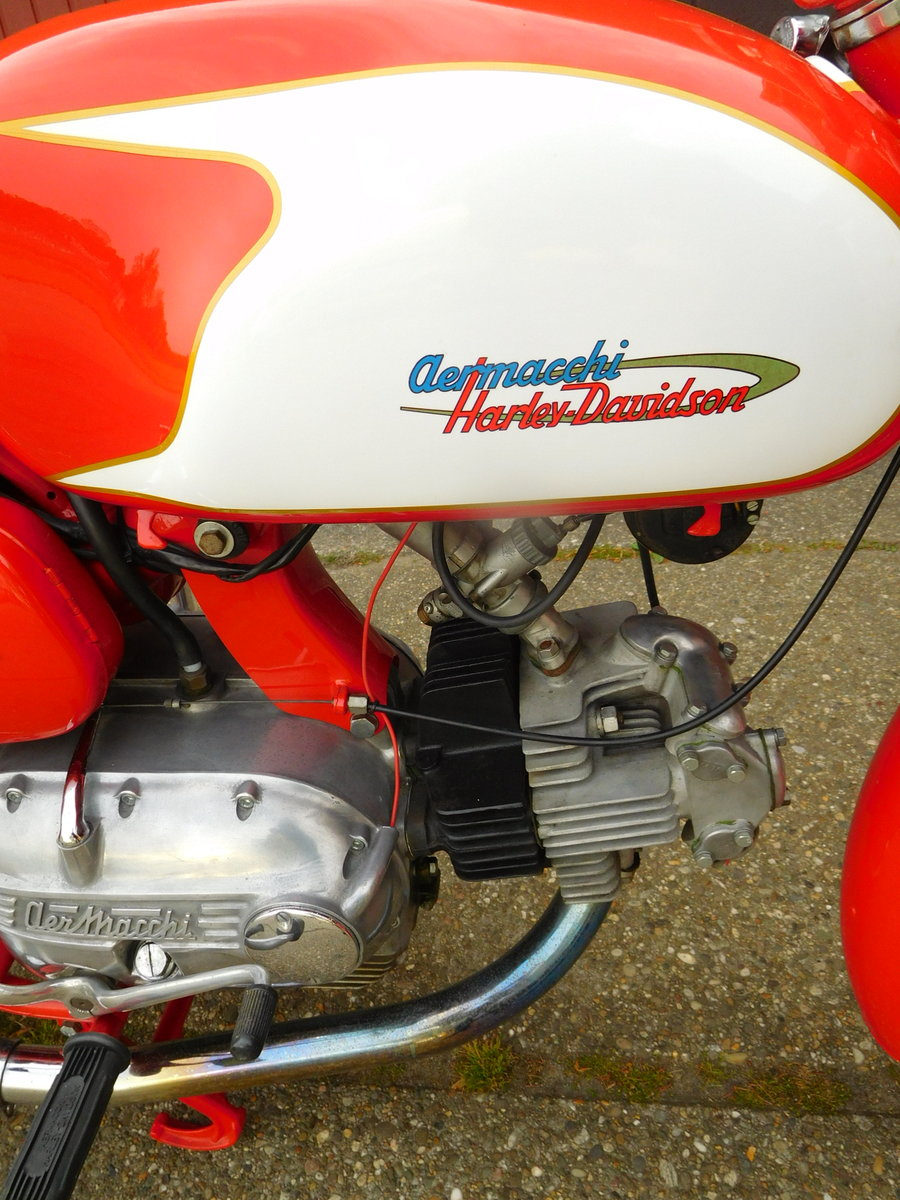 1965 Aermacchi Ala Verde in exellent condition For Sale (picture 2 of 6)