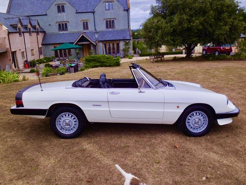 1988 Alfa Romeo Kammtail spider For Sale (picture 1 of 6)