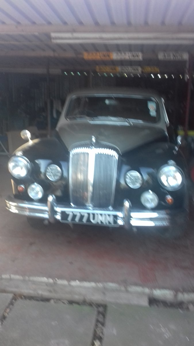Dr450 majestic majour limousin