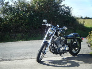 1989 Harley Davidson Sport 883 For Sale