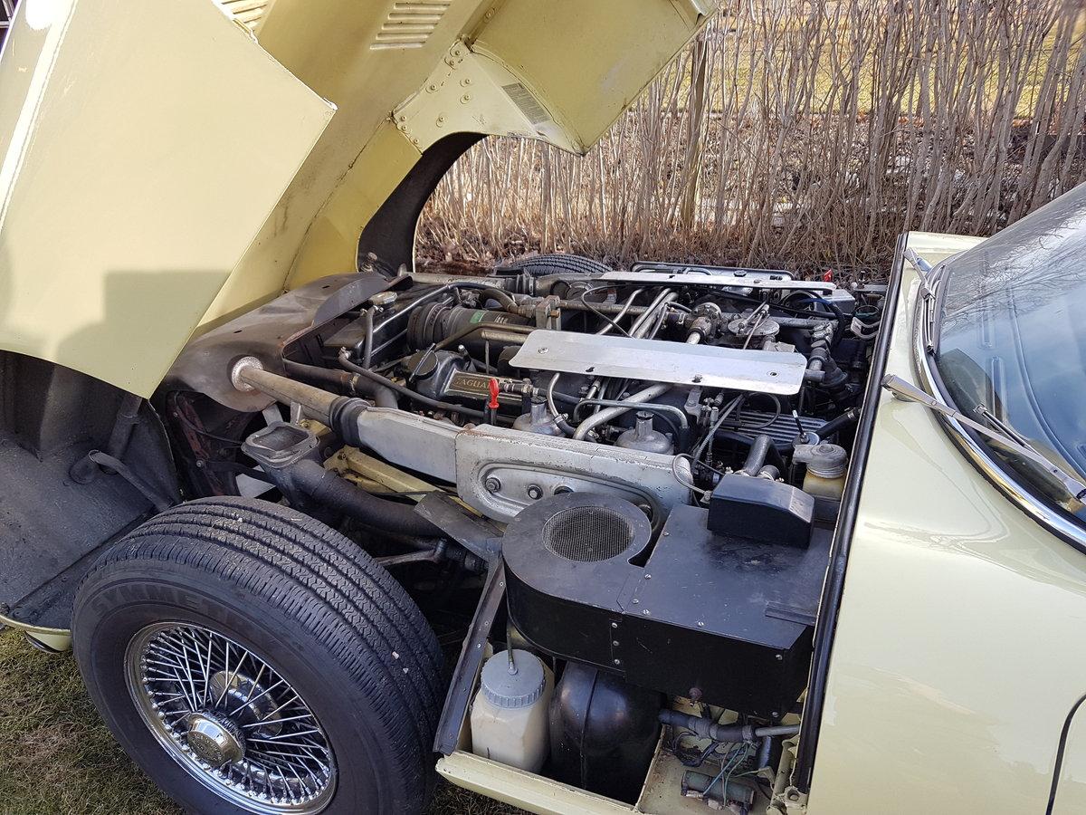 1973 Primerose E-type -73 For Sale (picture 5 of 6)