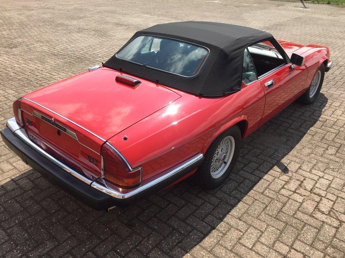 1989 Jaguar XJS V12 convertible | LHD | 46.000 mls For Sale (picture 3 of 6)