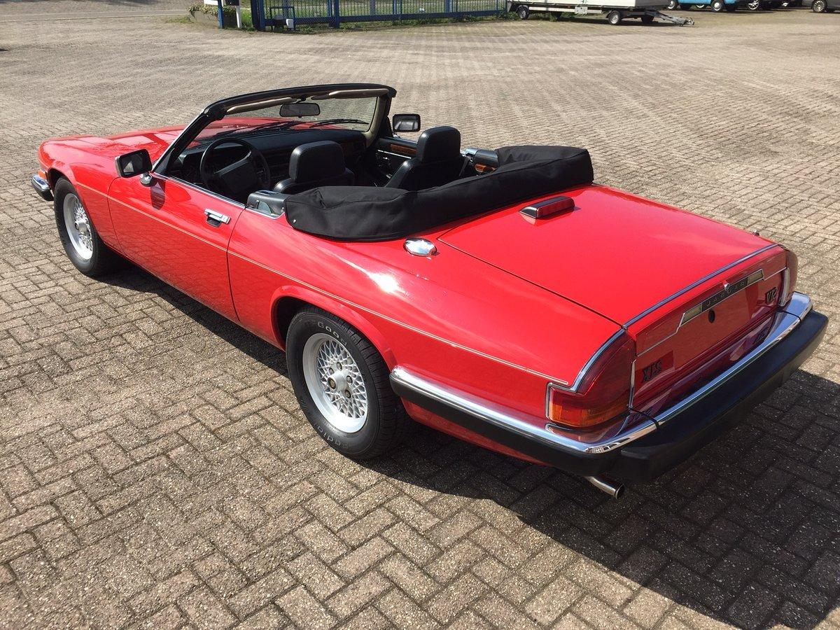 1989 Jaguar XJS V12 convertible | LHD | 46.000 mls For Sale (picture 4 of 6)
