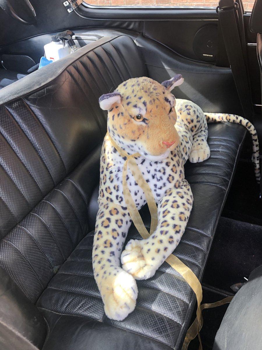 Jaguar E-Type Series 3 V12 Coupe Primrose  For Sale (picture 5 of 6)