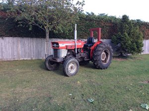 1978 Messy Ferguson 154 fruit tractor