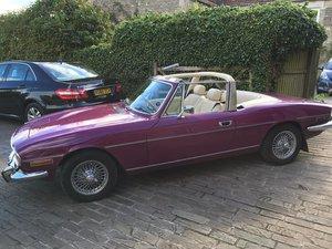 Triumph Stag Purple  For Sale