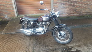Picture of 1966 Triumph 500 SOLD