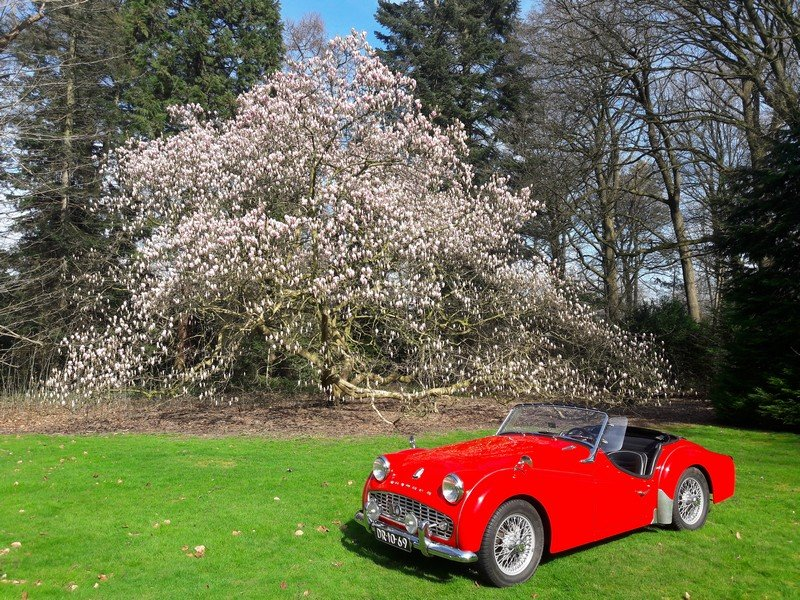 Triumph TR3 red 1959   28900 euro. SOLD (picture 2 of 6)