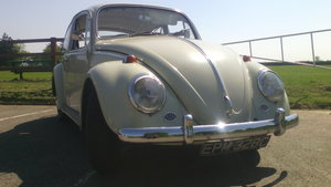 1965 much loved and reliable bug
