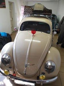 1953 VW Beetle 1100cc Split window Zitter For Sale