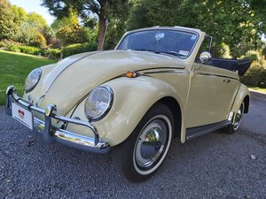 1965 Beetle Is This California Dreaming or What?