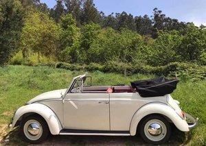 1962 Vw beetle cabrio