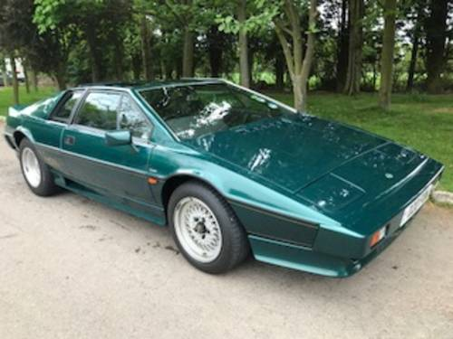1980 LOTUS ESPRIT WANTED For Sale (picture 2 of 6)